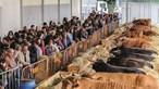 Feiras agrícolas estão de regresso a Braga