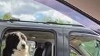 Cão apanha ar com estilo