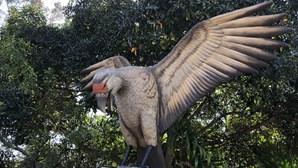Investigadores descobrem fósseis de aves carnívoras gigantes na Argentina