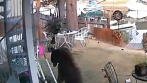 Urso invade casa na Califórnia