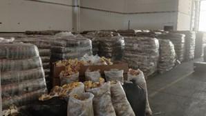 Feijão do Brasil esconde cocaína em Loures