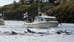 Ilhas Faroé abateram mais de 1400 golfinhos num só dia