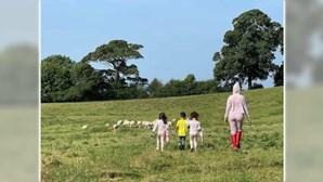 Cristiano Ronaldo obrigado a mudar de casa em Manchester por causa das... ovelhas