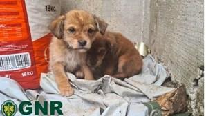 GNR resgata três cães maltratados e abandonados pela dona em Resende