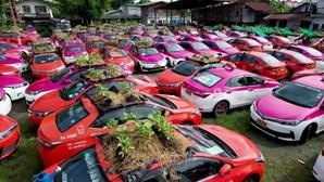 Cooperativa de táxis na Tailândia transforma 300 veículos em hortas para combater a crise