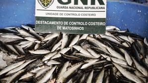 GNR apreende mais de uma tonelada de sardinha em Matosinhos