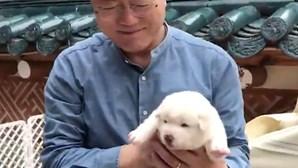 Presidente sul-coreano quer proibir o consumo de carne de cão