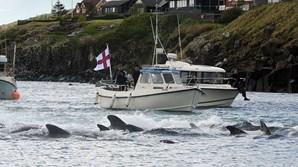 Ilhas Faroé abateram mais de 1 400 golfinhos num dia