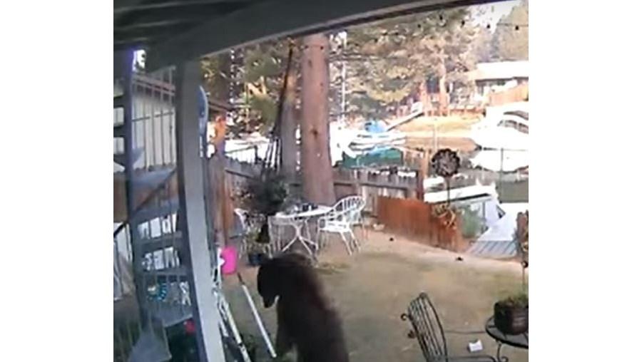 Animal foi apanhado através das câmaras de segurança