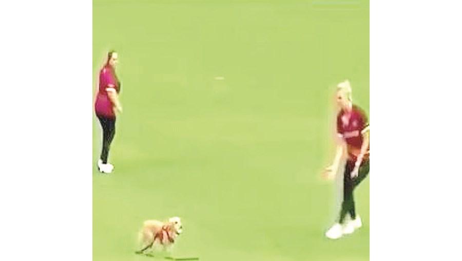 Cão interrompe partida de críquete