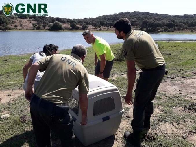 GNR resgata lontra-europeia que estava presa num tanque de água