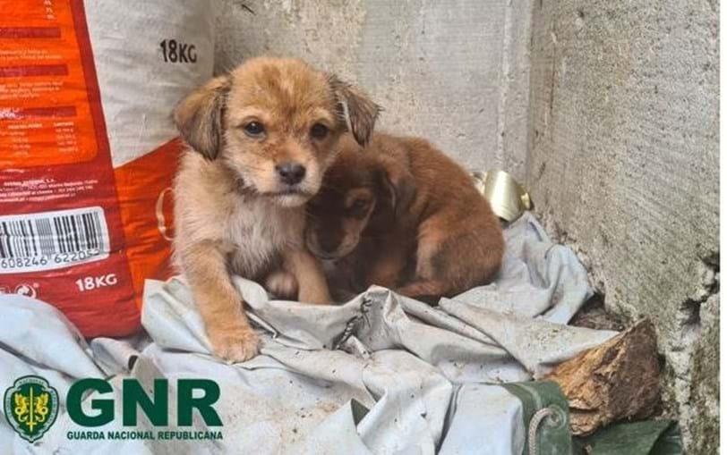 GNR resgata três cães em Resende