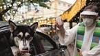 Animais domésticos abençoados por padres católicos. Veja aqui as imagens
