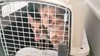 Resgate salva 54 cães e 36 gatos em alojamento de Elvas