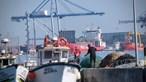 Ataque de orcas provoca danos em embarcação de pesca a sul de Troia