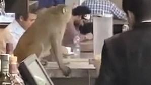 Macaco invade bar de aeroporto de Nova Deli na Índia