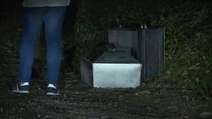 Caixão selado encontrado em mata em Santo Tirso