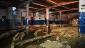 Obras para construção de hipermercado em Lisboa destapam vestígios arqueológicos