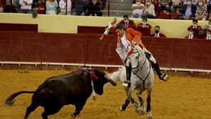 """Vender liberdades para ganhar votos"": Acusa ProToiro sobre touradas proibidas a menores de 16 anos"